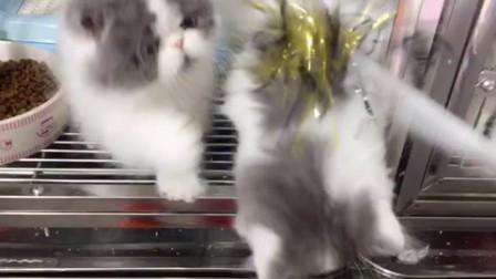 萌出血!小奶猫排排坐玩儿球球啦