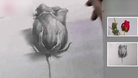 素描基础基础素描静物写生玫瑰1人体素描