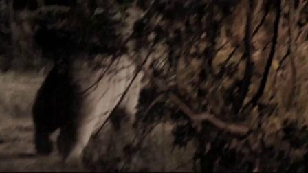 狂熊之灾 猛男斗熊撂狠话 巨熊复仇掀车袭人