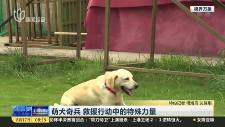 萌犬奇兵  救援行动中的特殊力量 上海早晨 170817