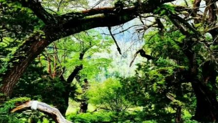 """林芝风景秀丽,被誉为""""江南"""",有林芝桃花节,有丰富多彩的南伊沟等。还有被誉为西双版纳的墨脱县和察隅县底部……"""