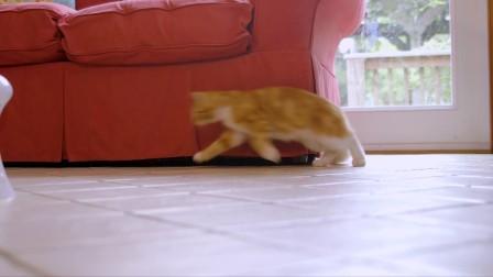 【2017新品】激光宝塔 - PetSafe* Multi laser旋转式自动激光逗猫器