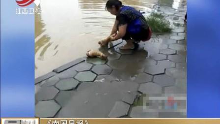 《南国早报》:商贩洪水中洗猪脚被罚4000元 晨光新视界 170823