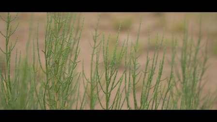 蚂蚁森林一岁啦!阿拉善SEE管护员聂玉胜发来祝福,看着我们一起种下的梭梭正在长大,满满的感动~