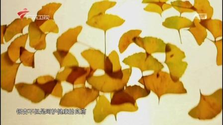 GDTV大型人文地理纪录片秘境神草06大地之恩全6集 汉语中字 720P