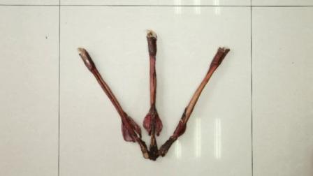 鹿鞭 鹿鞭批发 鹿鞭价格 13844919998