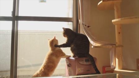 两只猫咪在争抢地方,等着看夕阳西下