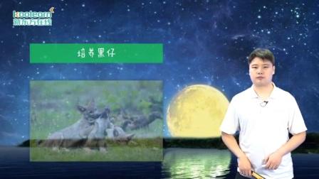 新东方中文精选图书分级阅读 狼王梦