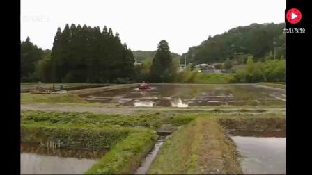 日本竟即将向中国出口大米,种植水稻跟国内比如何?