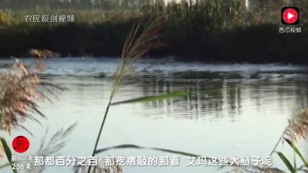 农民王小:2块钱一斤的大鲢鱼你信吗