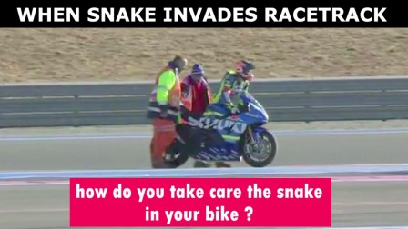 WHEN SNAKE INVADES THE RACE TRACK !