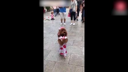 宠物泰迪穿旗袍去逛街,结果被老外包围,他们都没见过这样的泰迪!萌宠搞笑