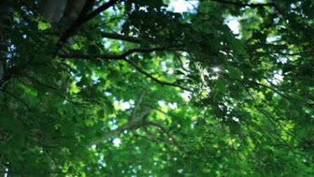 树林阳光实拍