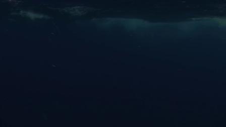 海豚与鲸鱼