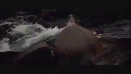 日本电影《渡过愤怒的河》上海电影译制片厂《追捕》主题曲