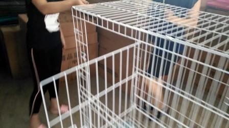 折叠猫笼安装演示