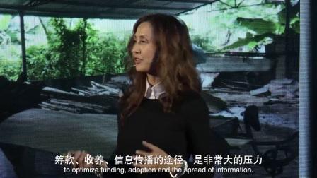 32只小狗如何鼓舞我开始可持续的动物营救 by SueWang@TEDx珠江新城