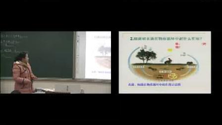 《细菌和真菌在自然界中的作用》初二生物-中牟县狼城岗中心中学:蒋凤霞