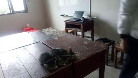 逗猫小组 7