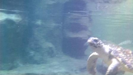 水下摄影01-北海海底世界海龟(gopro5+wg2测试)