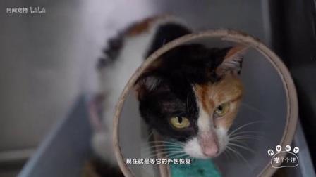 流浪怀孕母猫被人用开水烫伤,可以不爱但请不要伤害
