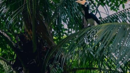 丹尼尔·雷德克里夫《丛林》预告片 | Jungle 2017