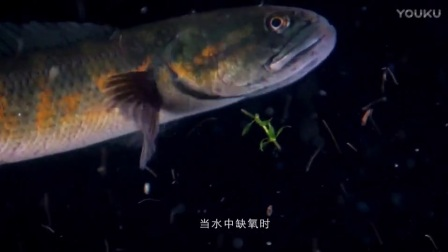 七星鱼宣传片