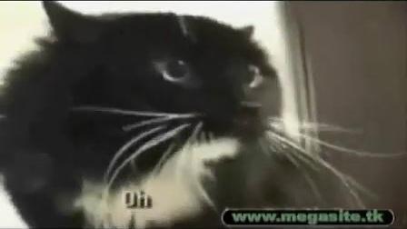 【失逝】动物和小孩超级搞笑视频_标清