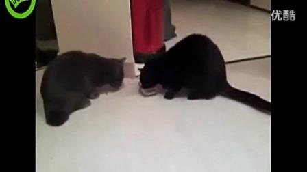 搞笑动物小猫咪视频 搞笑视频集锦_标清