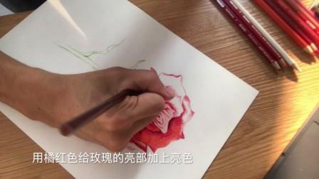 手绘彩铅画-红玫瑰