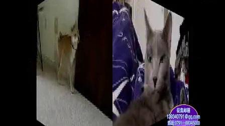 @家庭幽默录像   动物系列搞笑视频,亮点在那只