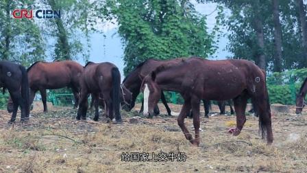 京城牧马人