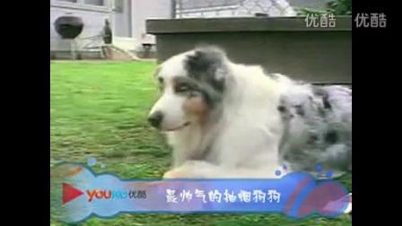 恶搞动物 搞笑视频笑死人不偿命_标清