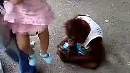 动物搞笑视频,猴哥爱饮牛奶_标清
