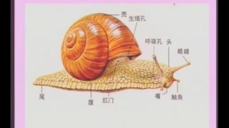 教科版_三年级_科学_上学期__三年级科学上册动物第1-3课《寻访小动物、蜗牛》