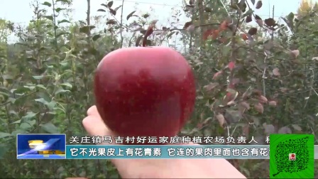 好运农场红色之爱红肉苹果!