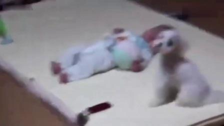 狗狗搞笑视频大全 搞笑狗狗和宝宝在一块儿, 谁能忍住不笑