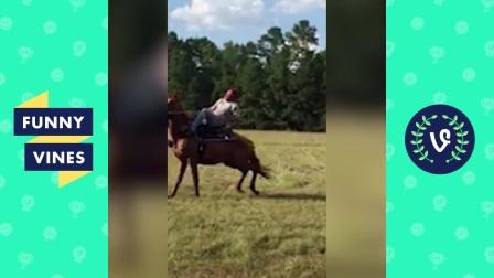 Funniest Equestrian Horse Fails and Falls