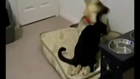 搞笑视频笑死人不偿命 人与动物的搞笑视频.mp4