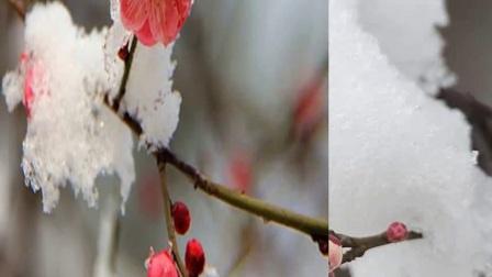《心中有朵花》葫芦晓峰