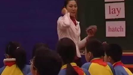 第4屆全國小學英語優質課大賽獲獎視頻-18.Penguins 新疆-馮應秀
