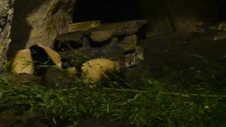 天寶 洞穴熊生時期
