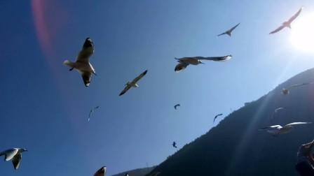 红嘴海鸥 子超一日游