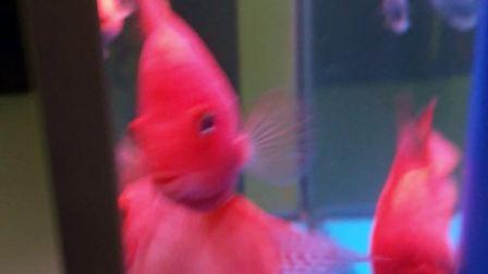可爱的小鱼鱼