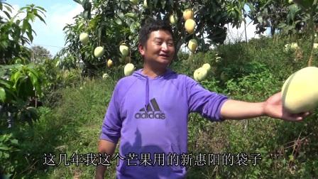 水果套袋增产增收回收果袋利国利民-四川新惠阳农业特种纸业有限公司纪实
