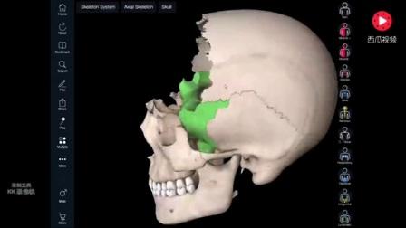 人体解剖50.颅骨.视频