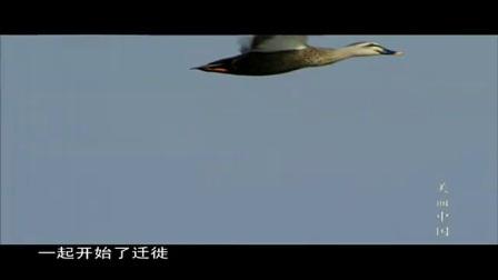 《美丽中国》第6集(高清)_360P