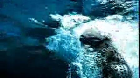 肯德基黄金烤鸡腿堡—游泳篇30秒