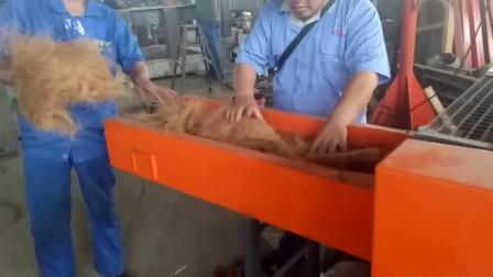 椰子纤维切断椰丝粗剪切设备椰子纤维粉碎机