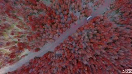 《皖南川藏线-最美宁国红杉林》系列片之二 徐锴作品 17年12月